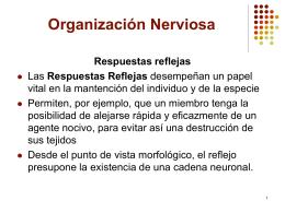 Organización Nerviosa