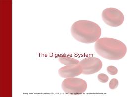 Chapter 17 The Digestive System