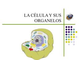 LA CÉLULA Y SUS ORGANELOS CLASE Nº 4