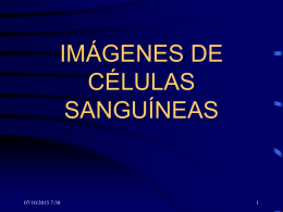 IMÁGENES DE CÉLULAS SANGUÍNEAS