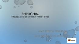 Ehrlichia. Patología y signos clínicos en perros y