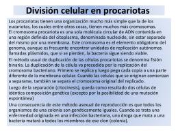 División celular en procariotas