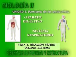 Sistemas digestivo y respiratorio: su función y