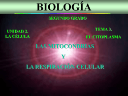 Las mitocondrias y la respiración celular