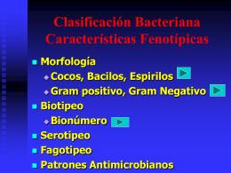 Clasificación Bacteriana Características