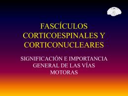 FASCÍCULOS CORTICOESPINALES Y CORTICONUCLEARES -