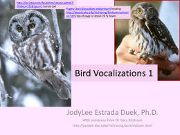 Bird Vocalizations