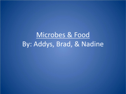 Microbes & Food By: Addys, Brad, & Nadine
