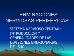 Terminaciones nerviosas periféricas. Vía de las