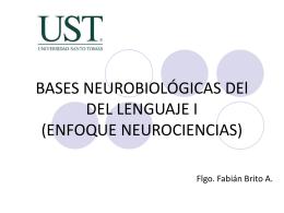 BASES NEUROBIOLÓGICAS DE LA ADQUSICIÓN Y