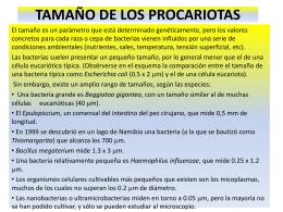 TAMAÑO DE LOS PROCARIOTAS
