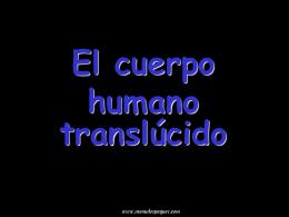 El cuerpo humano translúcido