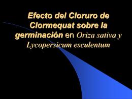 Inhibición de la Germinación por medio de Cloruro