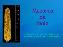 AG2- Mazorca de maíz