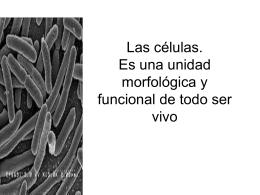 Las células - ccnnnivel2c