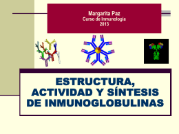 GENETICA DE LAS INMUNOGLOBULINAS
