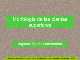 Morfología de las plantas superiores