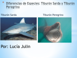 Diferencias de Especies: Tiburón Sarda y Tiburón