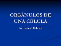 ORGÁNULOS DE UNA CÉLULA