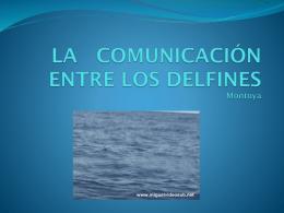 LA COMUNICACIÓN ENTRE LOS DELFINES