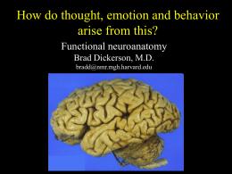 Functional neuroanatomy Brad Dickerson, M.D.