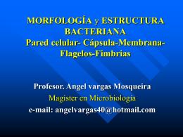 MORFOLOGÍA y ESTRUCTURA BACTERIANA Pared celular-