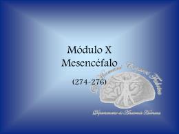 Módulo VIII Mesencéfalo