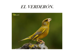 EL VERDERÓN.