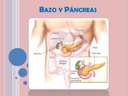 Bazo y Páncreas