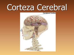 Neuroanatomía - Fisioterapia