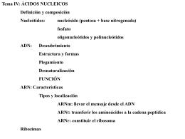Biología. 2º Bachillerato. Tema 4: Ácidos