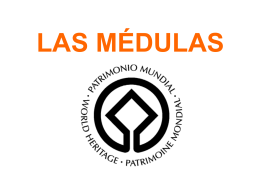 LAS MÉDULAS - aprendespañol.com: free resources to