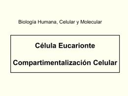 Evolución a Células Eucariontes - BluWiki