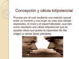 Concepción y célula totipotencial