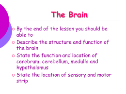 The brain structure and functions