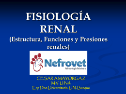 FISIOLOGIA RENAL - Nefrovet | Nefrourología