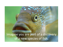 Discovery of a New Fish Species