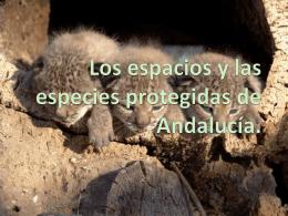 Los espacios y las especies protegidas de