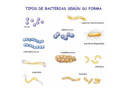 TIPOS DE BACTERIAS SEGÚN SU FORMA