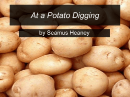 At a potato digging
