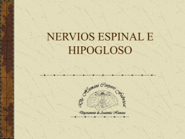 Nervios Espinal e Hipogloso XI y XII pares