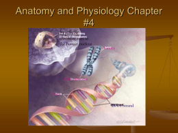 Anatomy and Physiology Chapter #4