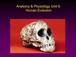 Anatomy & Physiology Unit 6: Human Evolution -
