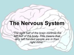 The Nervous System - Sam Houston State University