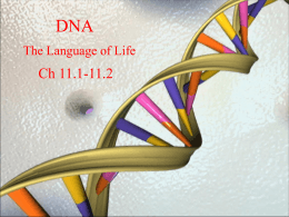 DNA - Wikispaces