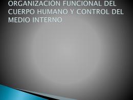 ORGANIZACIÓN FUNCIONAL DEL CUERPO HUMANO Y CONTROL