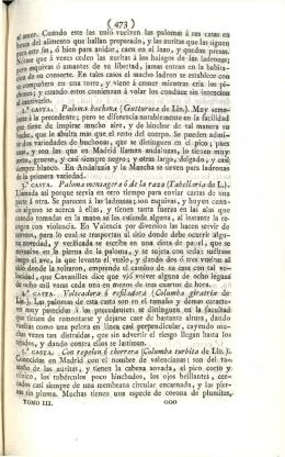 (473 ) Paloma buchona (Gutturosa de Lin.). Muy seme