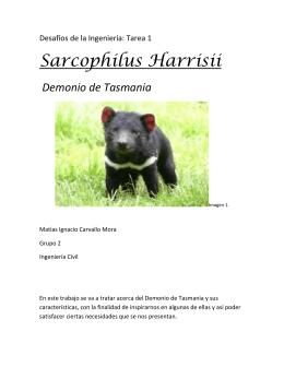 Sarcophilus Harrisii