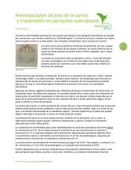 Knemidocoptes (ácaros de la sarna) y tratamiento en periquitos