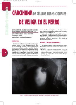 carcinomade células transicionales de vejiga en el perro